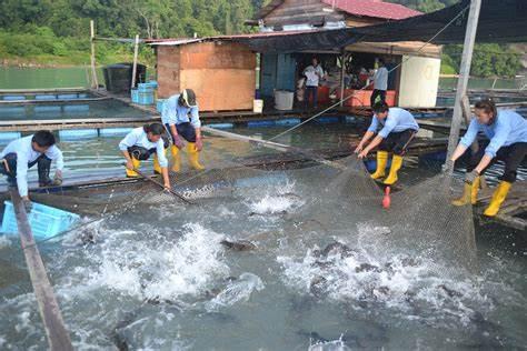 Fishermen told to switch to aquaculture – Fish Farmer Magazine