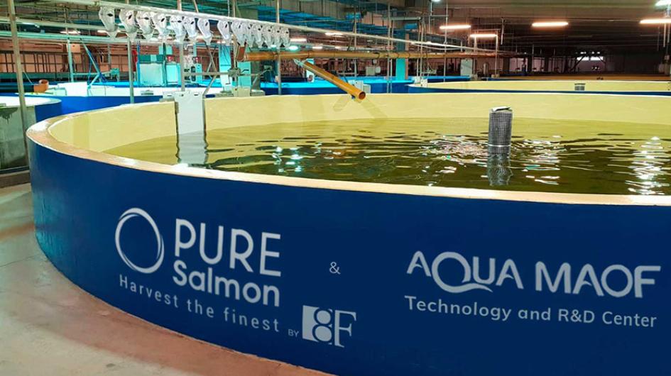 Pure Salmon chooses Comparison Standard for contract supply – Fish Farmer Magazine